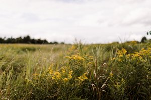 Fields for Days